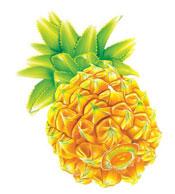 菠萝养生水果的禁忌