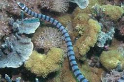 养生保健产品海蛇