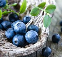 养生美容产品蓝莓