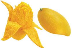 绿色养生产品芒果
