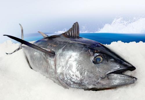 养生健康产品金枪鱼