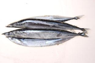 保健产品秋刀鱼