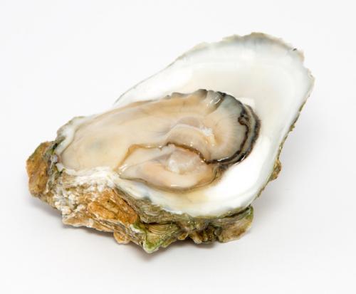 养生健康产品牡蛎