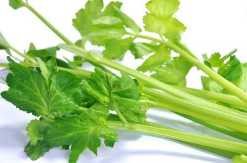 绿色养生产品芹菜