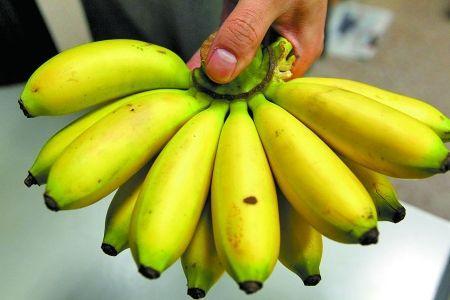 芭蕉和香蕉区别,芭蕉有清热解毒的作用
