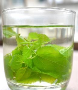 养生茶(保健茶)配方54-桑叶茶