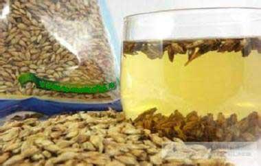 养生茶(保健茶)配方64-大麦芽茶