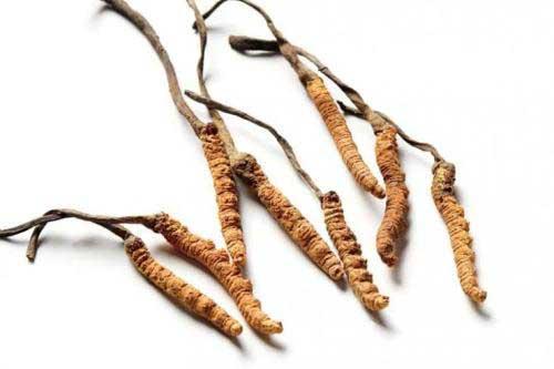 能与冬虫夏草配伍的补品和食材