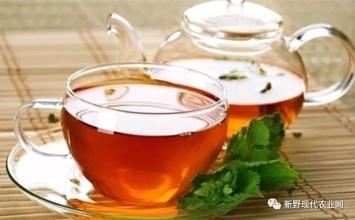 养生茶(保健茶)226-荆芥茶