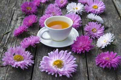 养生茶(保健茶)242-紫苑茶