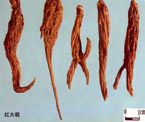 药茶(304)-红大戟水